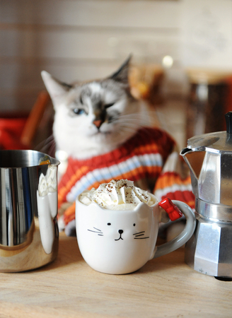White blue-eyed cat dressed in orange striped sweater. Coffee with whipped cream in cup in the form of cat in foreground Stock Photo