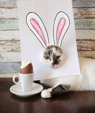 Easter bunny cat eating chocolate egg. Blue-eyed kitten with rabbit ears painted on white sheet Stock Photo