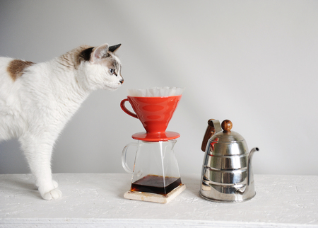 White cat and brewing drip coffee in red pour over. Kettle gooseneck. White background.
