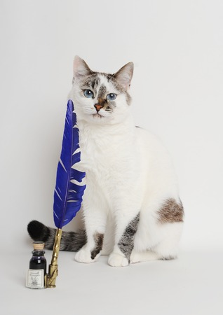 White cat with blue quill pen and ink 스톡 콘텐츠