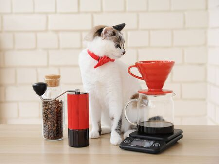 Barista cat. Alternative manual hand brewing coffee. Drip batch filter. Red coffee grinder. Electronic scale Stock Photo