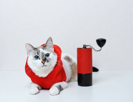 Cute blue-eyed cat in red Christmas hoodie lies on a white background. With manual coffee grinder. Free space, isolated