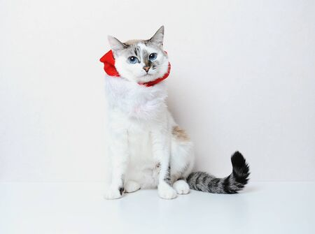 Cute blue-eyed cat in a christmas suit on a white background. Free space, isolated