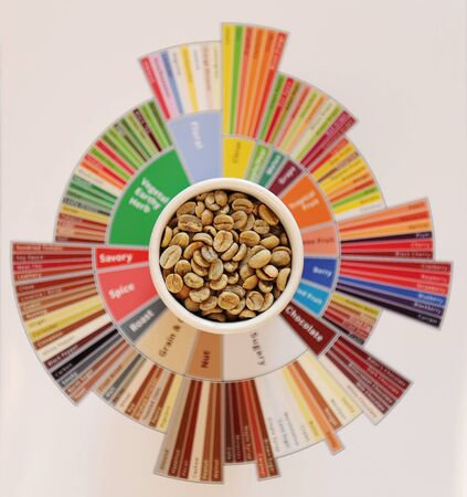 Specialty coffee concept. Raw green coffee beans in white cup on taster's flavor wheel. Top view. Third wave coffee