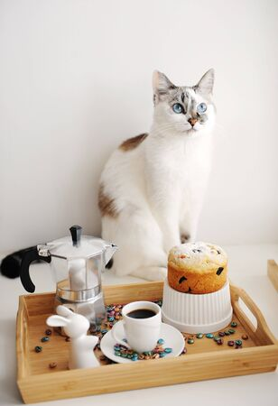 Cute cat and Easter still life. Coffee and cake. Espresso maker moka pot. White dishes, ceramic easter bunny