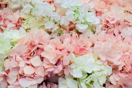 muur van grote witte en roze bloemen-pioenen