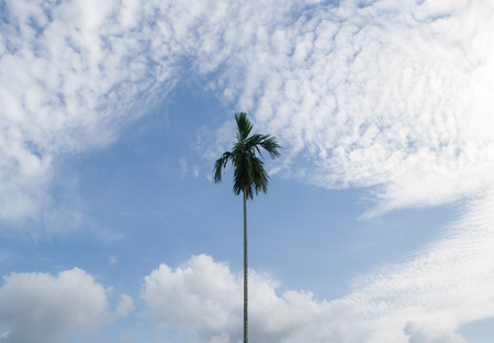lonely tree: lonely tree