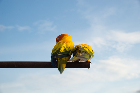 red sky: Two parrot standing on a branch. Stock Photo