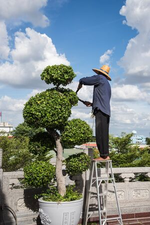 bush trimming: The workers are working with decorated trees. Stock Photo