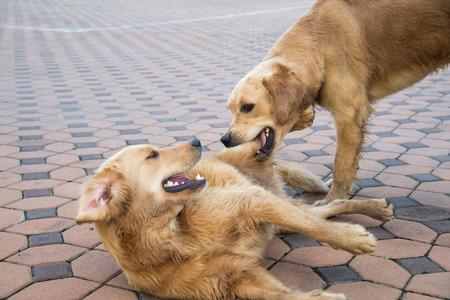 kampfhund: Der Hund und der Hundenahrungsmittelkampf