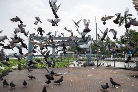 palomas volando: Una bandada de palomas volando. Foto de archivo