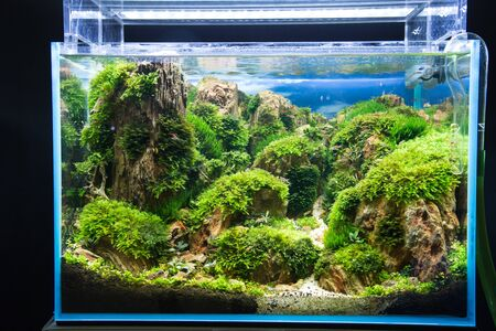 stony corals: Chong coral growth in fish