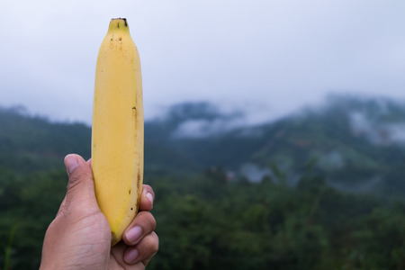 peeledoff: a large peeled-off banana in a hand.