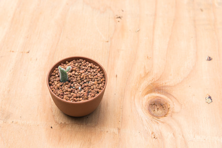 Cactus in pot on wood background. Standard-Bild