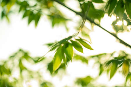 Abstract background image blurred nature of green tree