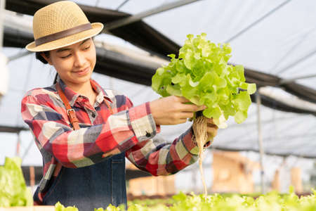 Beautiful young farmer Asian woman is checking the Organic vegetable farm in a hydroponic at morning and sunlight. Small business concept