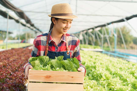 Beautiful of farmer young Asian women and holding a basket of vegetables while standing harvest in Organic vegetable farm and morning sunlight. Small business concept