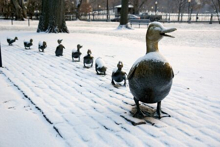 the famous family of brass ducks in bostons public gardens after a small snow storm