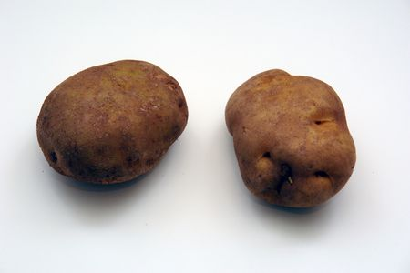 two russett potatoes, over white, not isolated