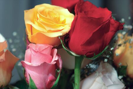 Colorful bouquet of roses Imagens