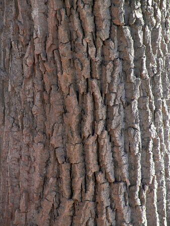 creases: Detail of tree trunk in light and shadow, showing deep creases in the bark Stock Photo
