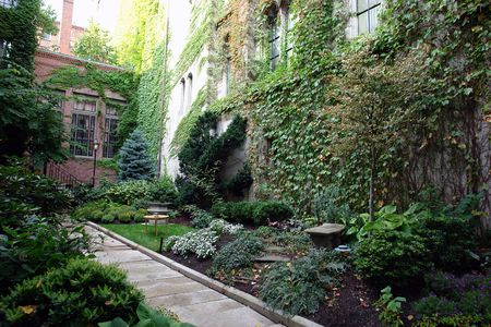 A lush boston garden in the fancy part of town, full and eclectic garden with path way leading to house                                photo