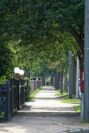 tree lined street on a summer afternoon in massachusetts