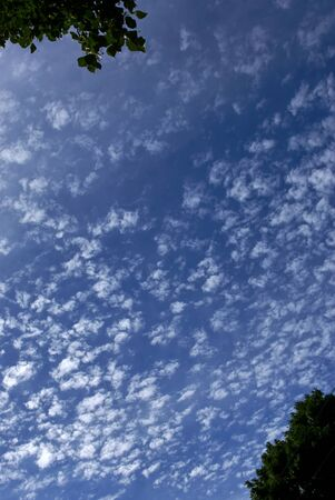 cotton ball: looking up at the heavens at a deep blue sky and small cotton ball clouds, with trees in opposite corners