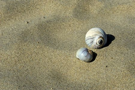 revere: two colorful snail shells with a sandy background at revere beach, massachusetts