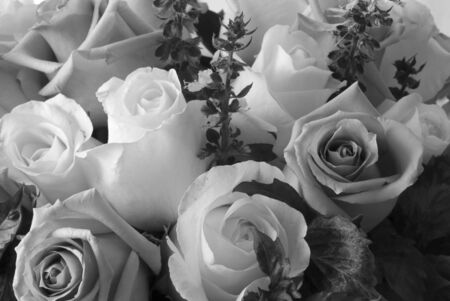 arranged: Beautiful black and white roses in bloom arranged in bouquet Stock Photo
