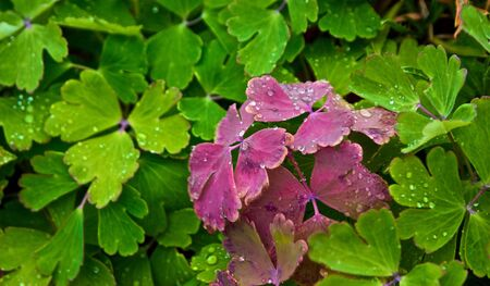 カラフルな赤と緑の葉に集まった盛り合わせ雨の滴 写真素材