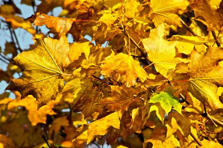 detail image of autumn leaves in tree Stock Photo - 3813874