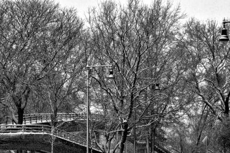 streetlights: trees streetlights and walking bridge during snowstorm in boston massachusetts