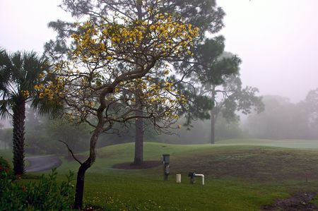 foggy morning in florida various trees and grassy hills