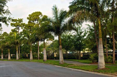 ヤシの木のボニータの春の終わりの朝通りを並べる行スプリングス フロリダ 写真素材