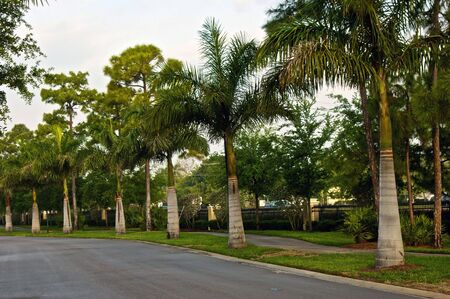 row of palm trees lining street on a late spring morning in bonita springs florida Stock Photo