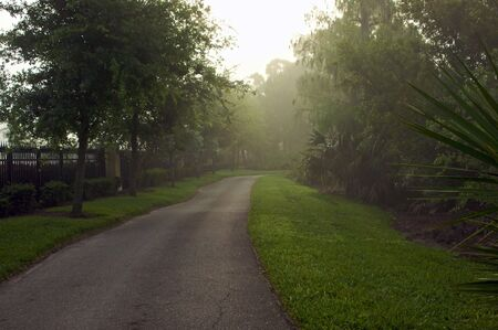 walking path: morning fog on walking path with grass and trees at sun rise