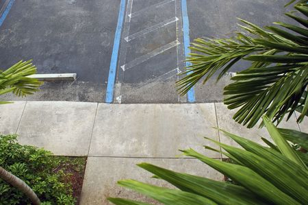 looking down at cement walkway at the edge of parking lot surrounded by palm trees