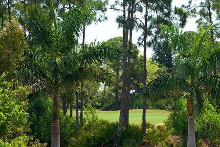 豊かな植生とヤシの木が広々 とした草原は、この熱帯のシーンをご記入ください。