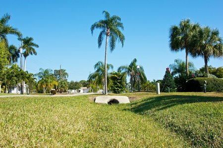 palm lined: Low angle view of a tropical neighborhood in southwest florida. The streets are lined with palm trees, foreground is all grass. Stock Photo
