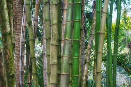 A cluster of old and young bamboo trees stand vertically and fill the frame