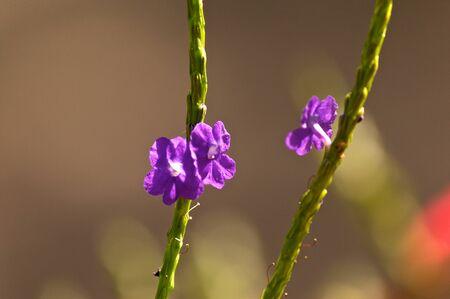 Kleine wilde bloemen in bloei op lange groene stengel. die in tegenovergestelde richtingen.