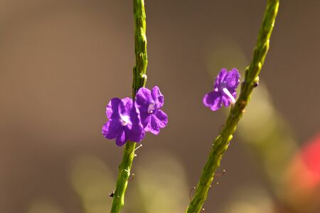 Small wildflowers in bloom on tall green stalk. going in opposite directions.