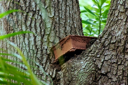 meta: a metal box is lodged in the V of atree trunk and the tree is growing around it Stock Photo