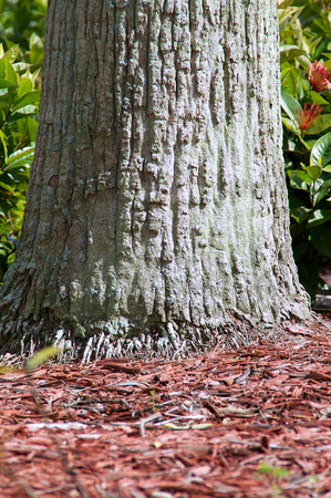 bark mulch: An old palm tree trunk up close showing the small roots that grow from the base