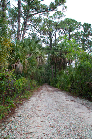 undeveloped: Standing at the mouth of an old rural road in undeveloped area of florida  Stock Photo