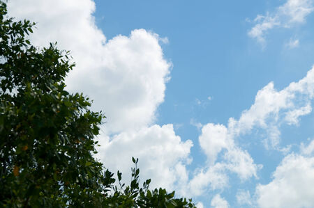 With focus on clouds, the trees in the foreground are out of focus directing the eye to the bright white clouds against a deep powder blue sky  版權商用圖片