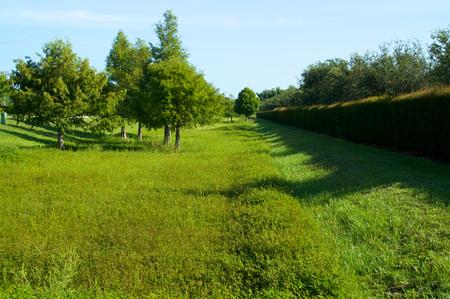 Op zoek naar beneden een uitgestrektheid van het veld van groen gras met bomen en gemanicuurde heg langs de rand.