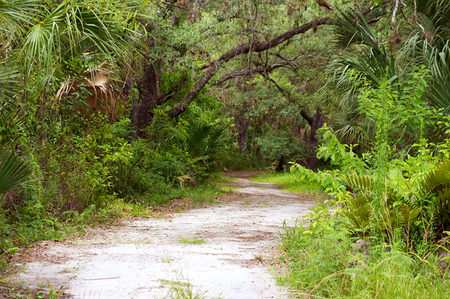 subtropical: A winding dirt road path leading into a subtropical forest
