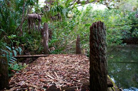 subtropics: Un vecchio marciume abbandonato molo o in barca dock sul fiume estero in Florida. Archivio Fotografico